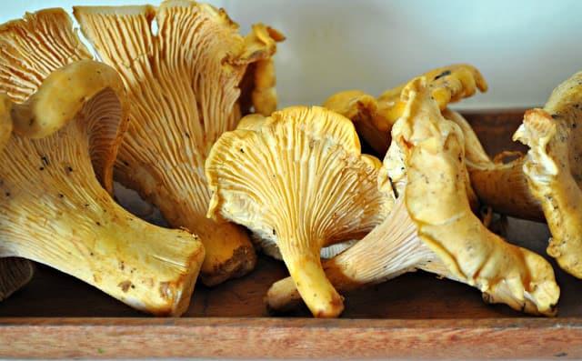 Fresh Chanterelles for Hungarian Mushroom Soup