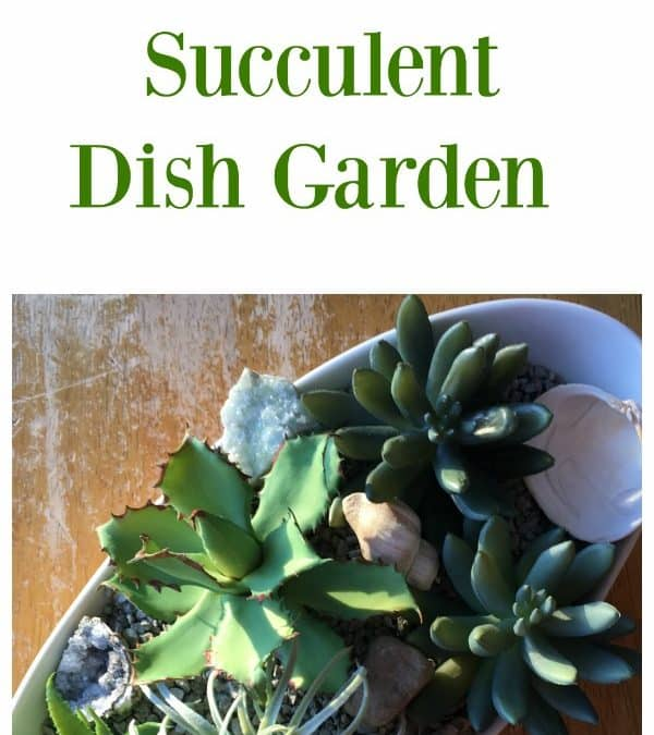 10 Minute Succulent Dish Garden