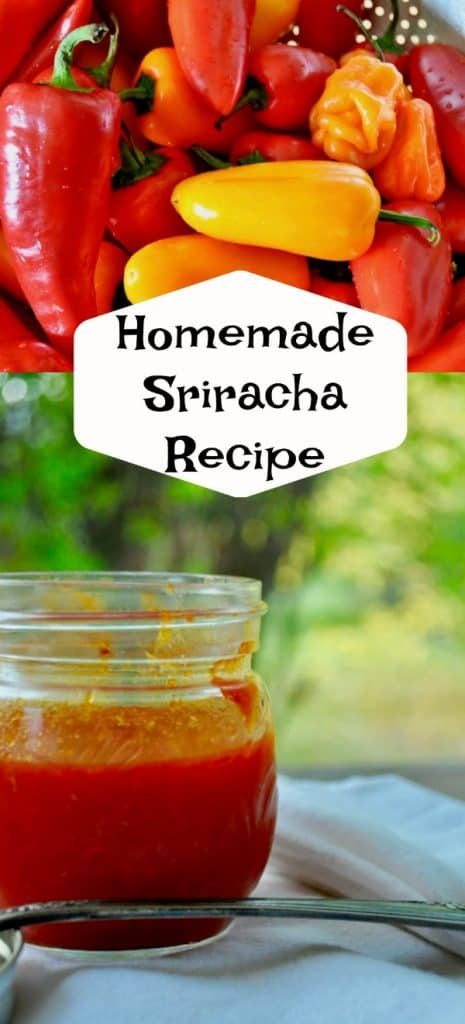 Award Winning Homemade Sriracha Recipe