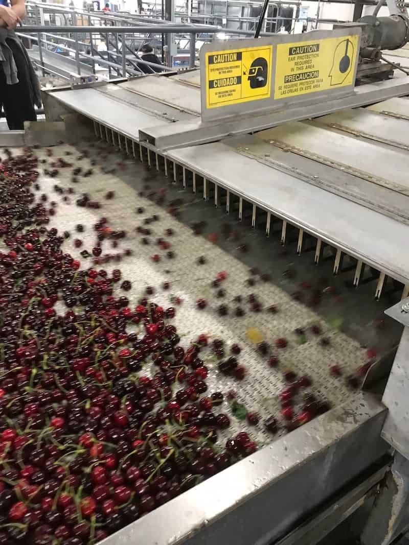10 Reasons to Buy Cherries Now